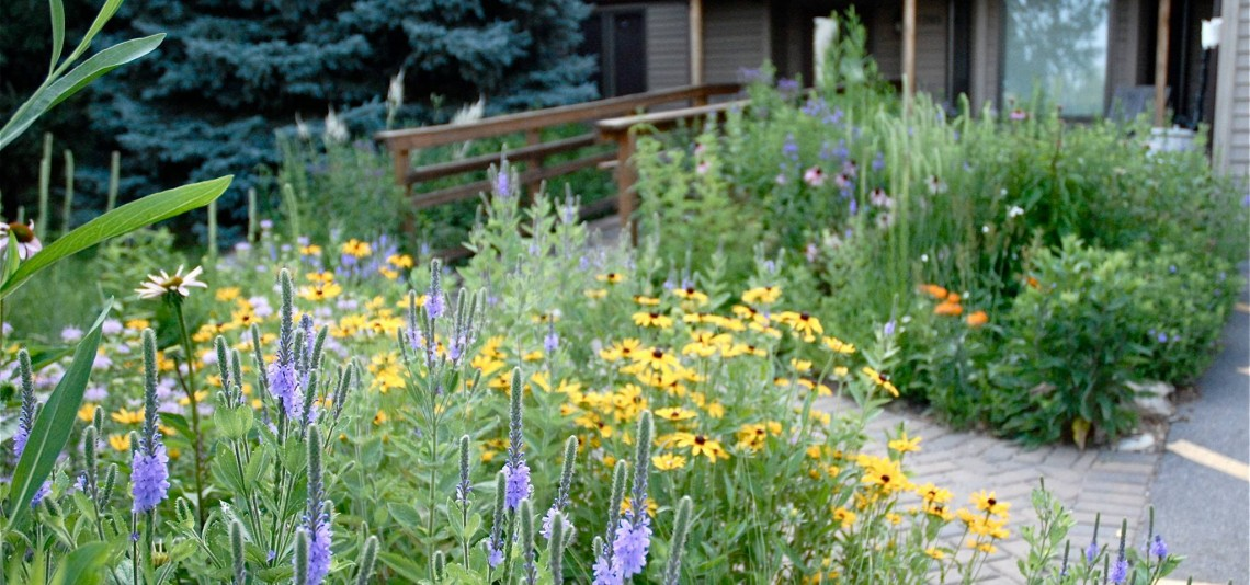 Rain Garden at Wild Ones Center in Wisconsin. Photo courtesy of The Meadow Project