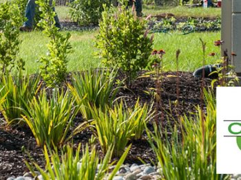 New Landscape Professional Certification Introduced