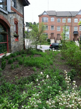 Conservation Landscape outside Biohabitats in Baltimore, MD
