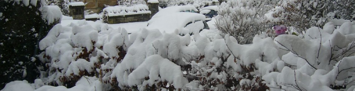 Garden in snow. Photo courtesy https://www.flickr.com/photos/jtadams/111304981/