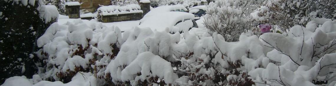Garden in snow. Photo courtesy https://www.flickr.com/photos/jtadams/111304981/