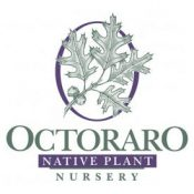 octoraro native plant nursery