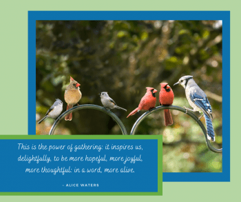 Photo of assorted birds gathering with quote