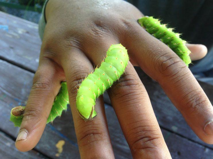 Hand with Caterpillar